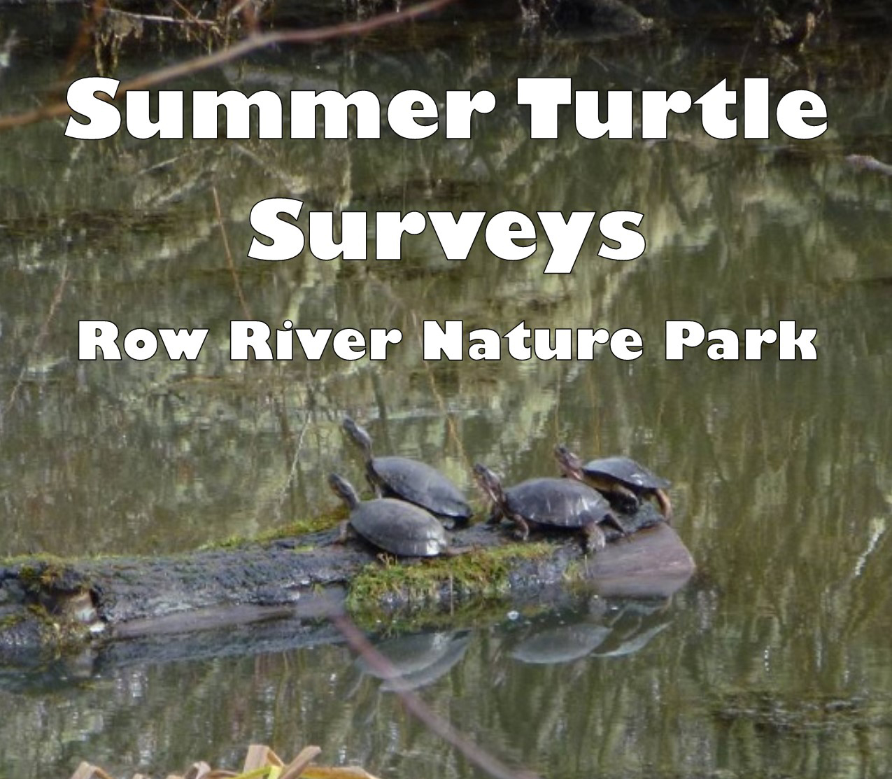 Row River Nature Resoration site with turtles